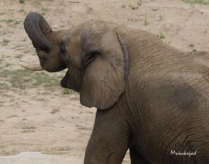Szczęśliwy Słoń