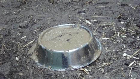 śniadanie dla mrówkojada