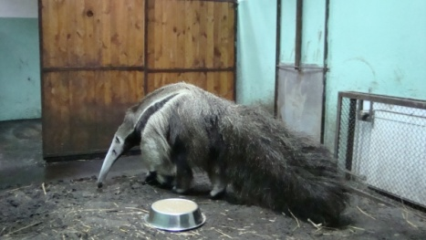 Eskado idzie coś zjeść