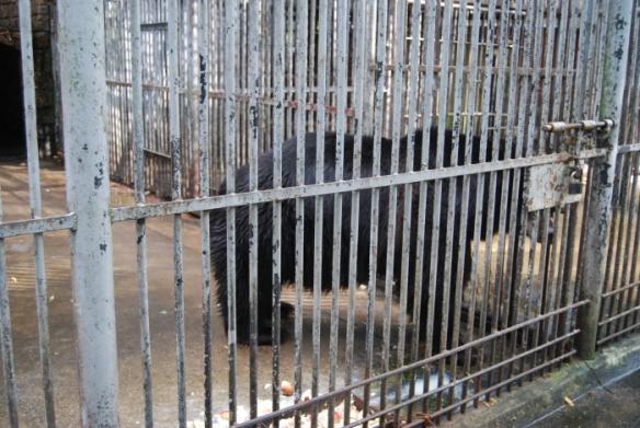 Niedźwiedzie Z Mini Zoo W Lesznie Co Dalej Mrówkojad I