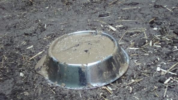 Obiad dla mrówkojada - co je mrówkojad w ZOO?