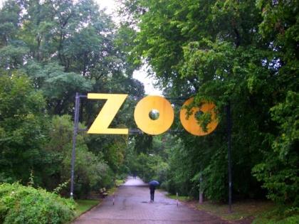 W drodze do warszawskiego zoo - Park Praski