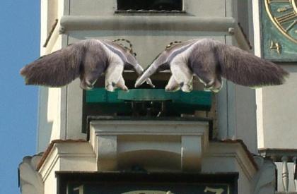 Mrówkojad-koziołki na poznańskim ratuszu