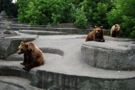 Niedźwiedzie brunatne w Parku Praskim