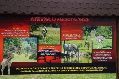 Nowe tablice informacyjne w Nowym Zoo w Poznaniu - sawanna afrykańska