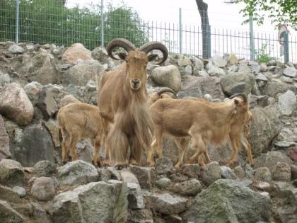 Arui - symbol toruńskiego Ogrodu Zoobotanicznego