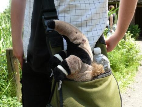 """Tadziu-Pluszowy Mrówkojad w torbie. Nasz znak rozpoznawczy dla redakcji """"ZOOrro"""""""