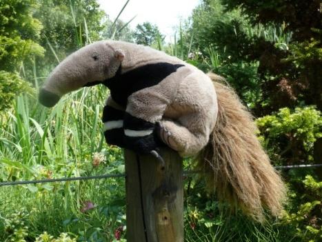 Tadziu Pluszowy Mrówkojad