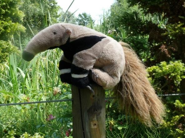 Tadzik-Pluszowy Mrówkojad na tle wybiegu opolskich mrówkojadów