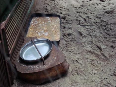 Śniadanie dla mrównika