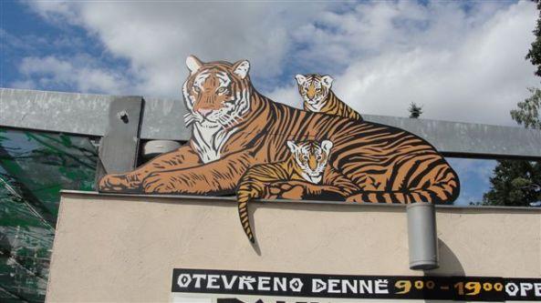 Tygrys na kasie