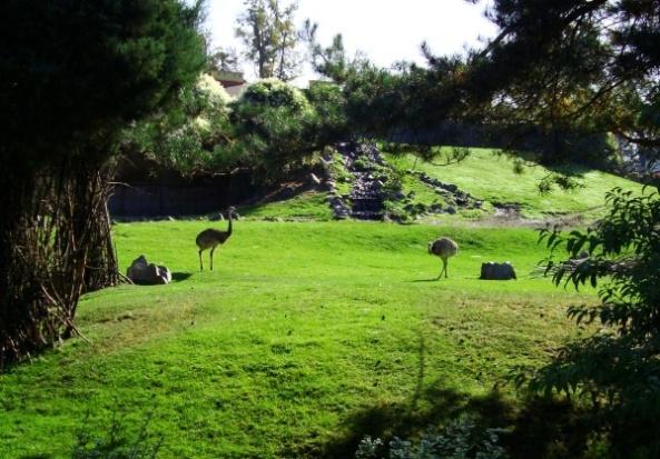Wybieg Ameryki Południowej w opolskim zoo