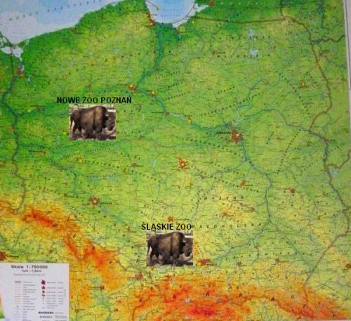 Bizony leśne w polskich ogrodach zoologicznych