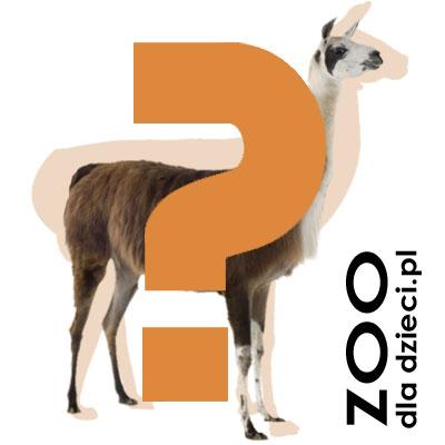 Logo nowej gry Zoo dla Dzieci
