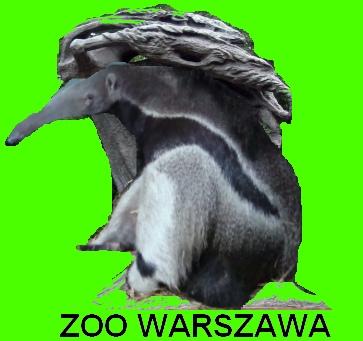 Nowe logo warszawskiego zoo - propozycja nr 2: Fryderyk Mrówkopin