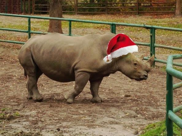 """""""Żarty sopbie stroją z poważnego nosorożca"""" powiedział nam Dino kiedy spytaliśmy, co sądzi o swojej nowej czapce"""