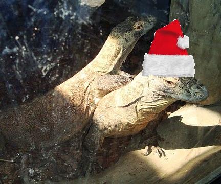 """""""Jaja sobie robią wkładając nam jakieś niepoważne czapki!"""" - oburzyła się jedna z poznańskich waranic z Komodo:)"""