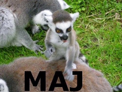Lemur majowy
