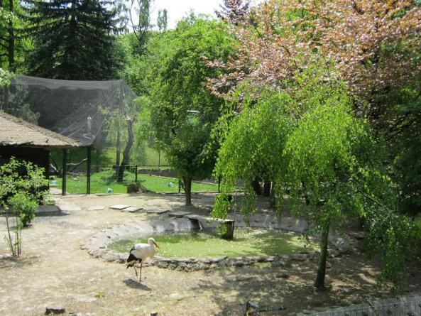 Bocianom w krakowskim zoo jest bardzo dobrze