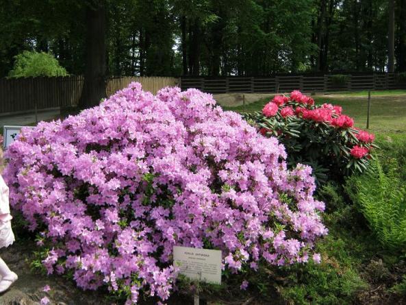 Zieleń i kwiaty w krakowskim zoo