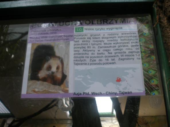 Polatucha olbrzymia - nowa mieszkanka wrocławskiego zoo (fot. Kasztanek)