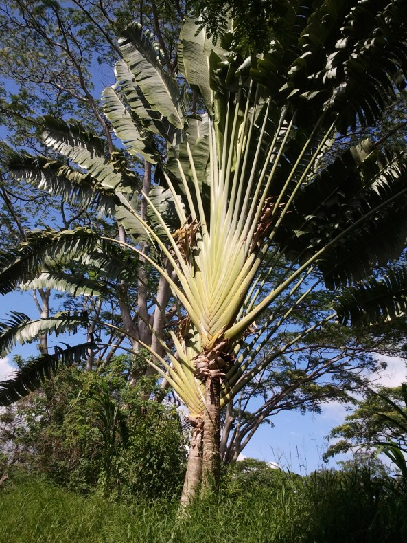 Hawajskie rośliny