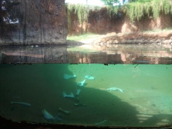 Basen krokodyli