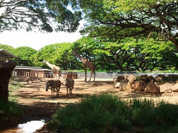 Współny wybieg żyraf i zebr