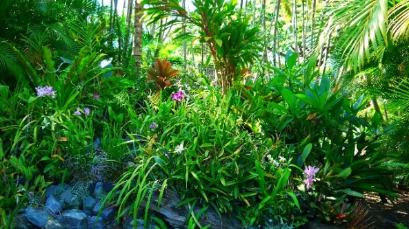 Również takie rośliny nadają barw ogrodowi w Honolulu