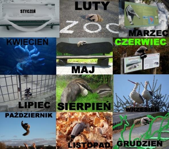 Rok w zoo!