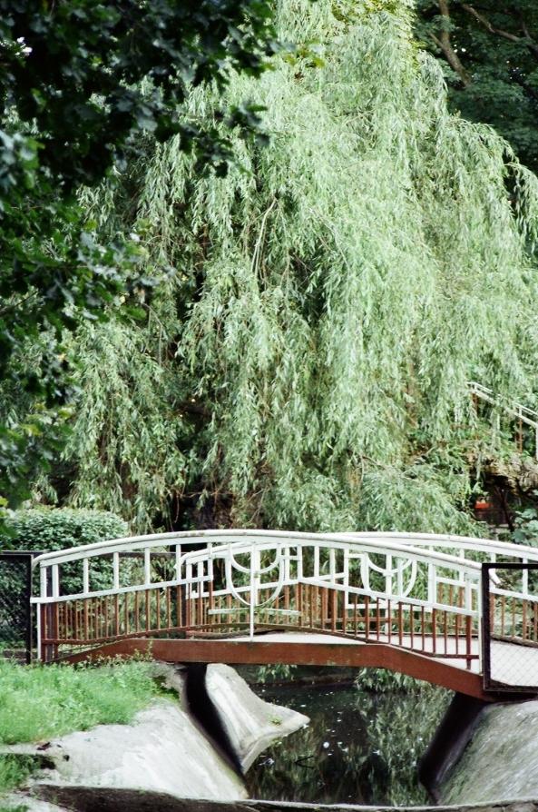 Most w parku (fot. M. Nakonieczny)