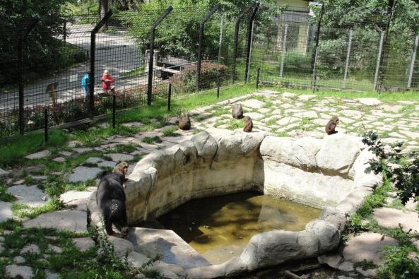 Wargacze i makaki niedźwiedzie w Chemnitz żyją w zgodzie