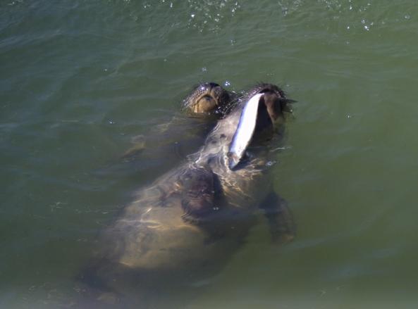 Jedzenie ryby nie zawsze jest łatwe...