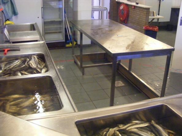 Kuchnia, w której przygotowuje się pokarm dla fok