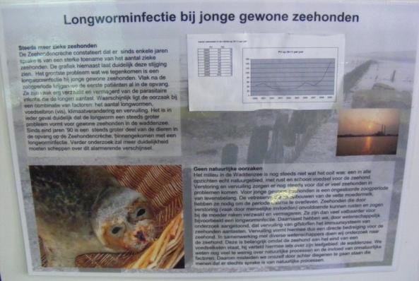 Tablica informująca o pasożytach płuc u fok