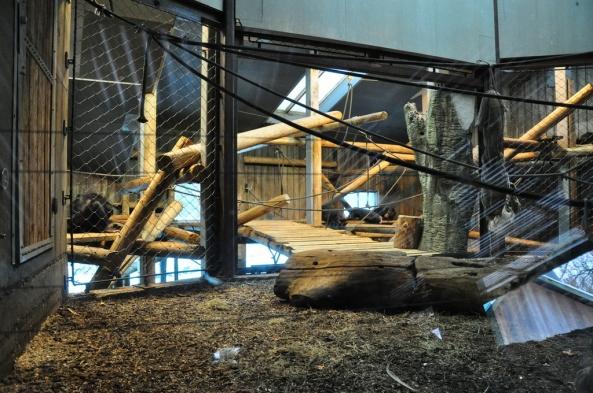 Wybieg szympansów wewnątrz