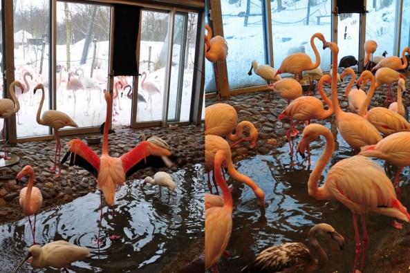 Wnętrze schronienia flamingów