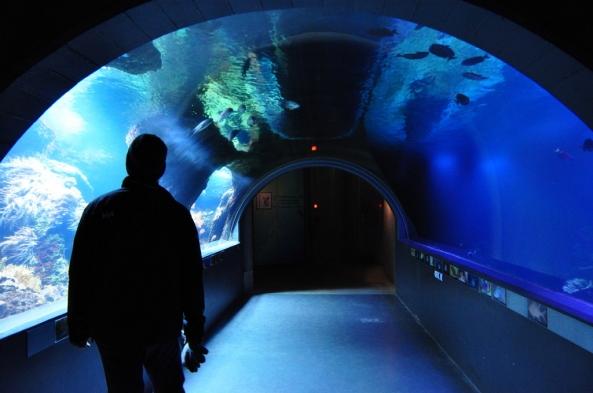 """Podwodny tunel - akwarium – przejście z lasu tropikalnego na """"Antarktyde"""""""