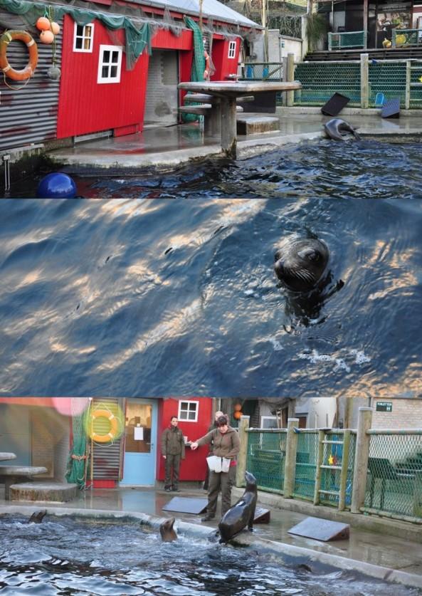 Zbiornik dla uchatek zaaranżowany, jako domek rybacki