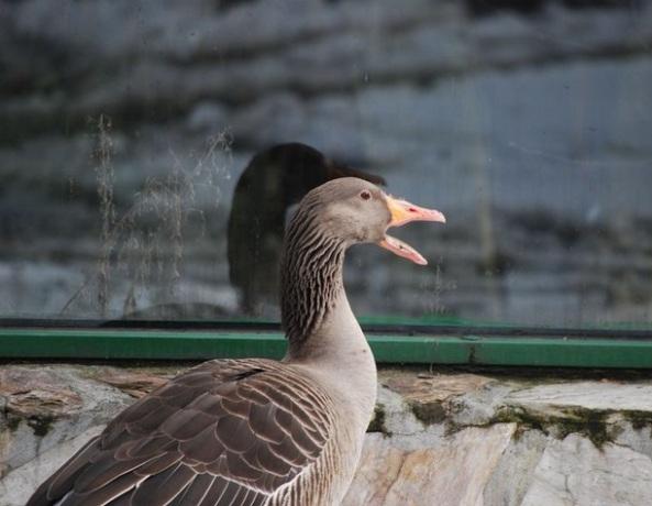 (fot. Zoo Wrocław)