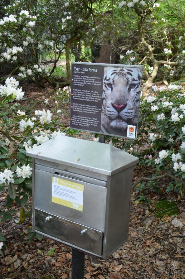 skarbonka na białe tygrysy