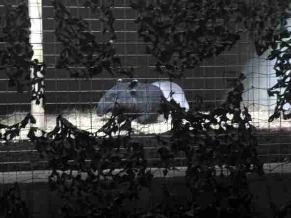 Pomieszczenia wewnętrzne tapirów  w Casson Pavilion