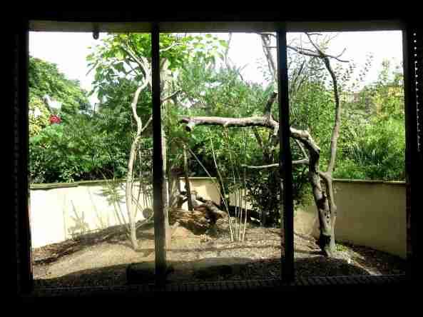 Widok na jedną z części wybiegu koati