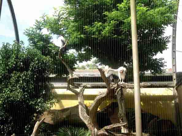 woliery ptaków drapieżnych