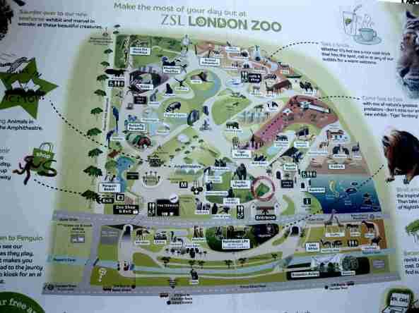 Zoo Londyn, sierpień 2013 007