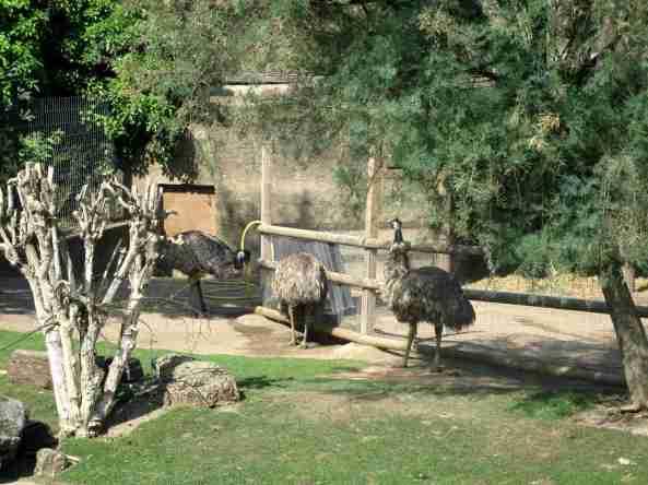 Zoo Londyn, sierpień 2013 070