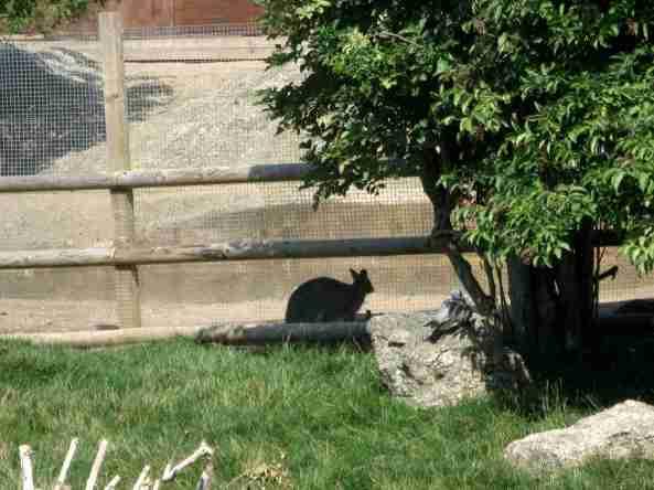 Zoo Londyn, sierpień 2013 075