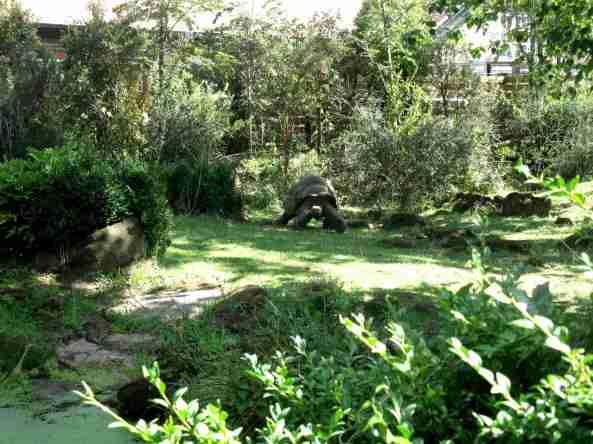 Zoo Londyn, sierpień 2013 093