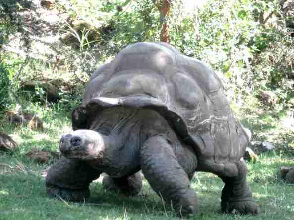 Zoo Londyn, sierpień 2013 095