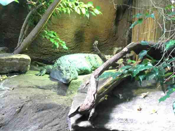 Zoo Londyn, sierpień 2013 160